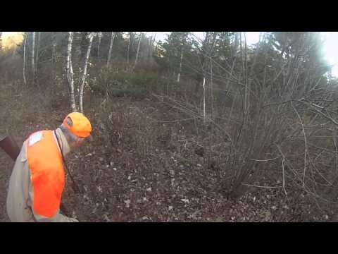 Pheasant hunting in Byfield MA