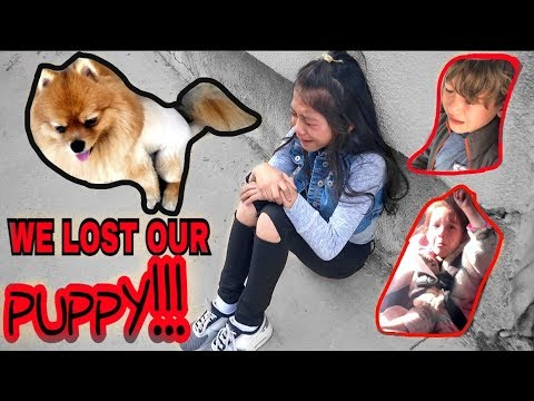 WE LOST OUR PUPPY.. PLEASE HELP US FIND HIM!! DAY #1| Familia Diamond