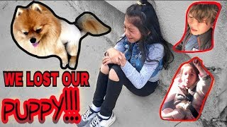 Download WE LOST OUR PUPPY.. PLEASE HELP US FIND HIM!! DAY #1  Familia Diamond Mp3 and Videos