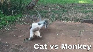 Cat vs Monkey - Thug Life