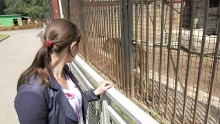 Прайд львов в минском зоопарке.(группа вконтакте: http://vk.com/pgshelp1 сайт: https://sites.google.com/site/na5balov заказать работу: ..., 2014-07-23T16:20:25.000Z)