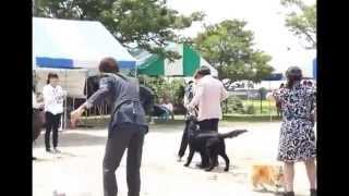 2014/7.27 @下関全犬種クラブ展 CN:ライリー BIS!!!