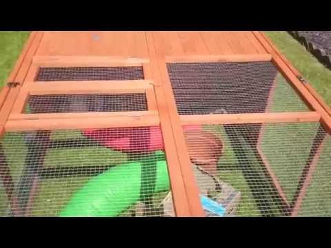 New Outdoor Run | Bunny Business