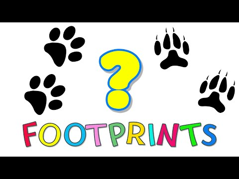 Learn Animals Names & Sounds & Footprints for Kids | Vocabulary fo kids