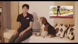 Michelle Pellum - Becoming A Certified Dog Trainer -animal Behavior College