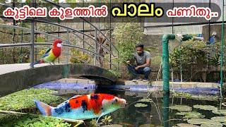 കുളത്തിലെ മീനുകളെ ചൂണ്ട ഇട്ട് പിടിച്ചാലോ ?? | Why I Caught Fishes From My Pond ??