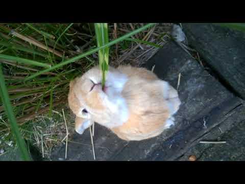 Cute animals – Konijnen filmpjes – #1 Schattig konijn   Noa staat op zijn achterpootjes gras te eten