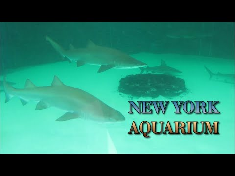 A Tour Around The Ny Aquarium At Coney Island Hd Youtube