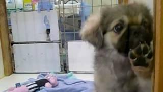 http://www.niigata-pet.jp/ 新潟のペットショップや動物病院などペット...