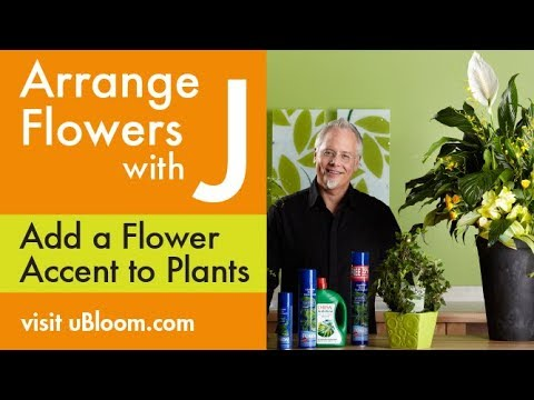 How to add Fresh Flowers to a Green Plant and Shine them Easily!
