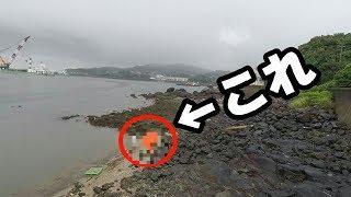 浜辺に居るこの生物がうますぎた【つりいろは×NFC×きまぐれ】 thumbnail