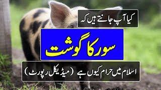 Soor Ka Gosht Islam Main Haram Kyun Hai - Islamic Videos in Urdu - Purisrar Dunya