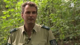 Wateroverlast zorgt voor problemen in het Kralingse bos