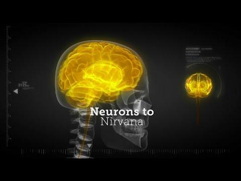 От нейронов к нирване: Медицинское применение психоделиков (2013)