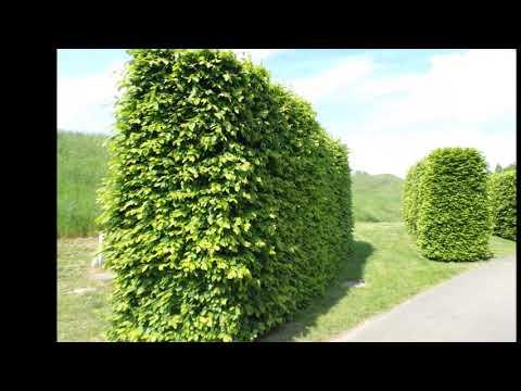 Bujstvo Zelenogo Cveta Krasivyj I Uhozhennyj Park Lyudi Ne Mogut Bez Prirody