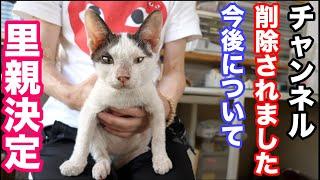 【アニマルレスキュー】疥癬(かいせん)で顔が酷かった猫の里親さんが決まりました!