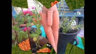 картинки овощей с морковью приколы