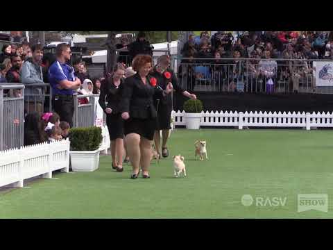 2018 Best in Show - Royal Melbourne Show All Breeds Championship Dog Show