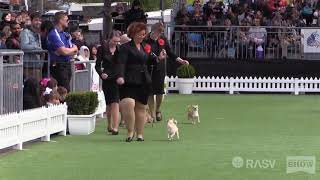2018 Best in Show  Royal Melbourne Show All Breeds Championship Dog Show