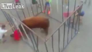 Raging bull smashes through bars of cage and gores man in shoc…