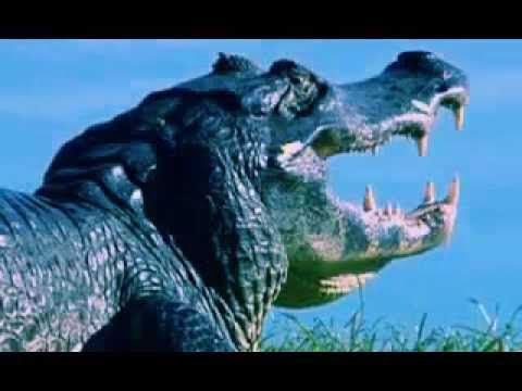 The Science of Survival Mutations   BBC Documentary 2016