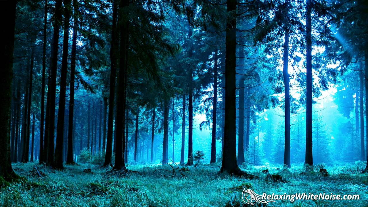 forest night nature sounds for sleep or studying white noise 10