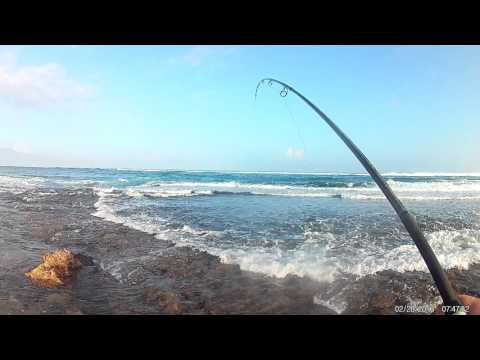 Sunrise North Shore Maui: Whipping For Omilu/Ulua 02-28-2016