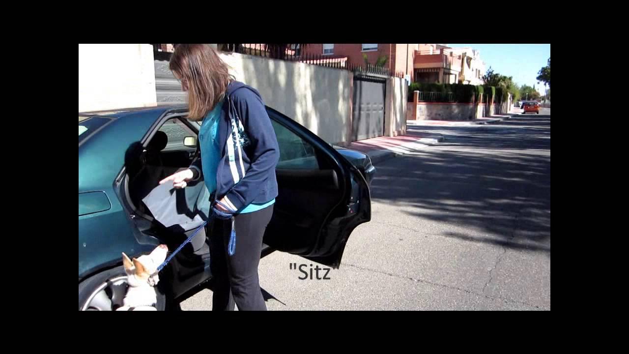 Cómo enseñar a subir a un cachorro al coche - YouTube