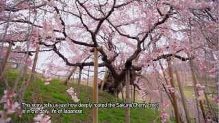 SAKURA on Japanese mind.