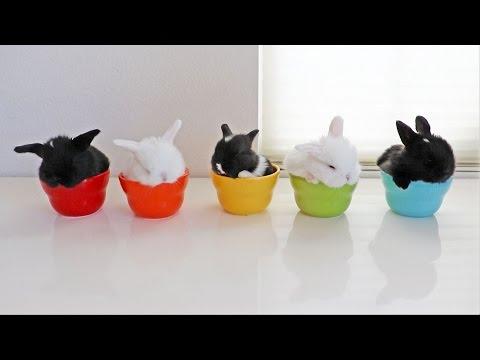 Baby Bunnies in Bowls