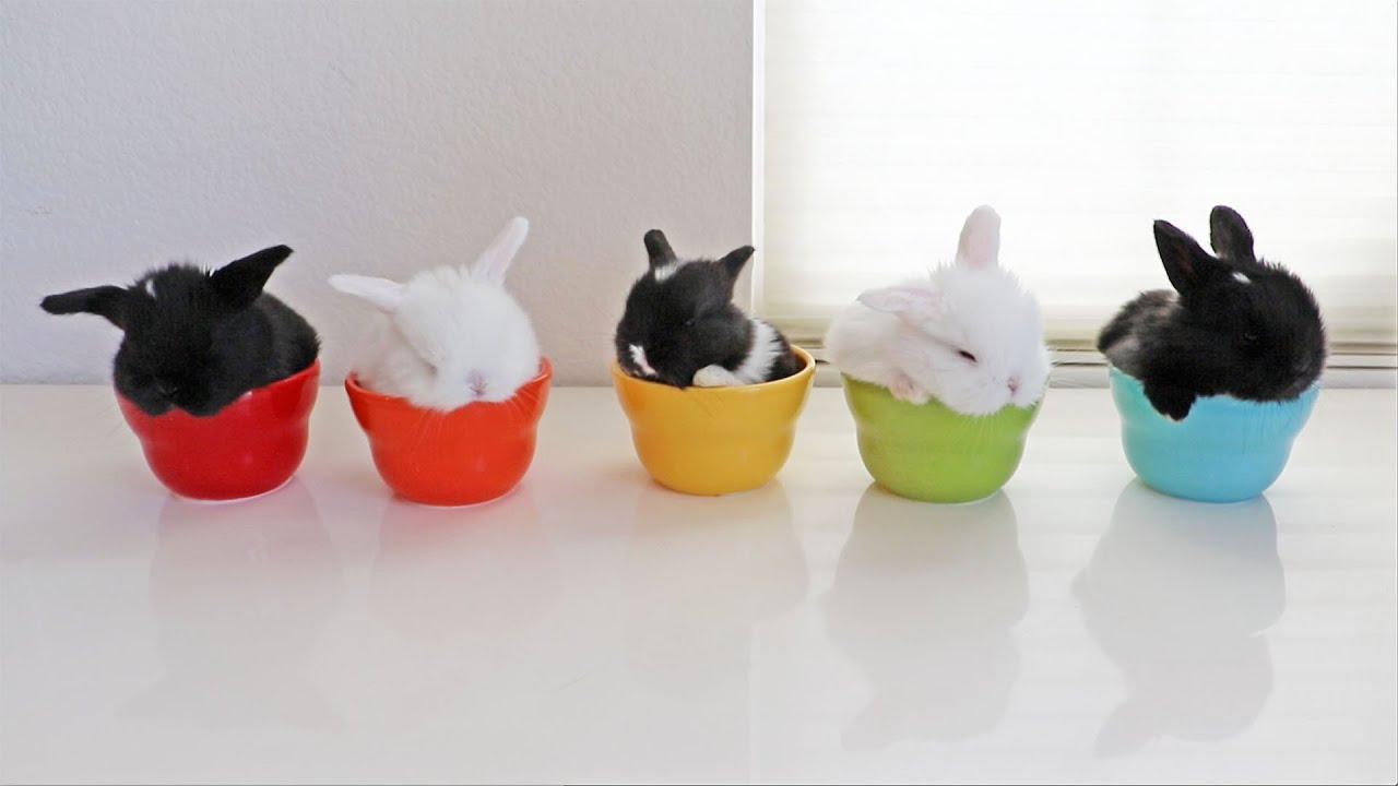 Cute Wallpaper Bunnies Baby Bunnies In Bowls Youtube