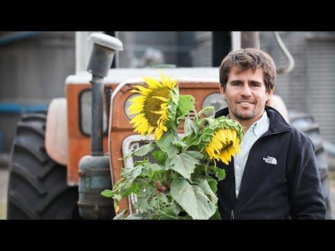 A Celebration of Sunflowers