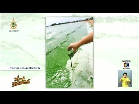 เรื่องเล่าเสาร์-อาทิตย์ ชาวขอนแก่นฮือฮา บึงหนองโคตรน้ำเปลี่ยนเป็นสีเขียวเข้ม (11มิ.ย.59)