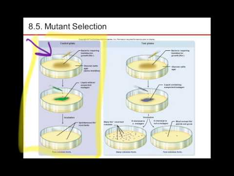 Nester7 Ch8 Mutant Selection to Plasmid Borne traits