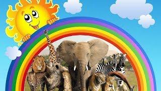 КАКИЕ БЫВАЮТ ДИКИЕ ЖИВОТНЫЕ. УРОКИ ДЛЯ ДЕТЕЙ ВМЕСТЕ С ZOE И ELMO. WILD ANIMAL.