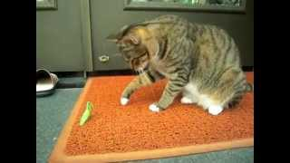 Кот и богомол!