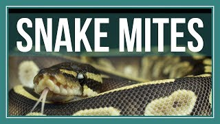 How to Completely Get Rid of Snake Mites