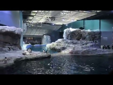 NEW PENGUIN AREA AT DETROIT ZOO (April 30, 2016) | beingmommywithstyle
