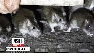 Are Packs of Rats Taking Over Outdoor Dining Huts at Night?
