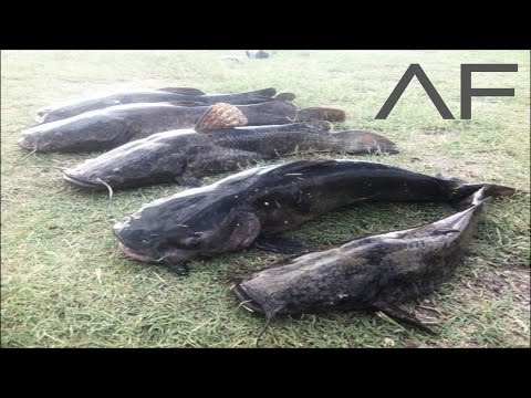 (Catfishing) Fishing Trip: 7/14/16 Pond and River from YouTube · Duration:  12 minutes 2 seconds  · 671 views · uploaded on 7/14/2016 · uploaded by Robert Moss Catfishing and Outdoors