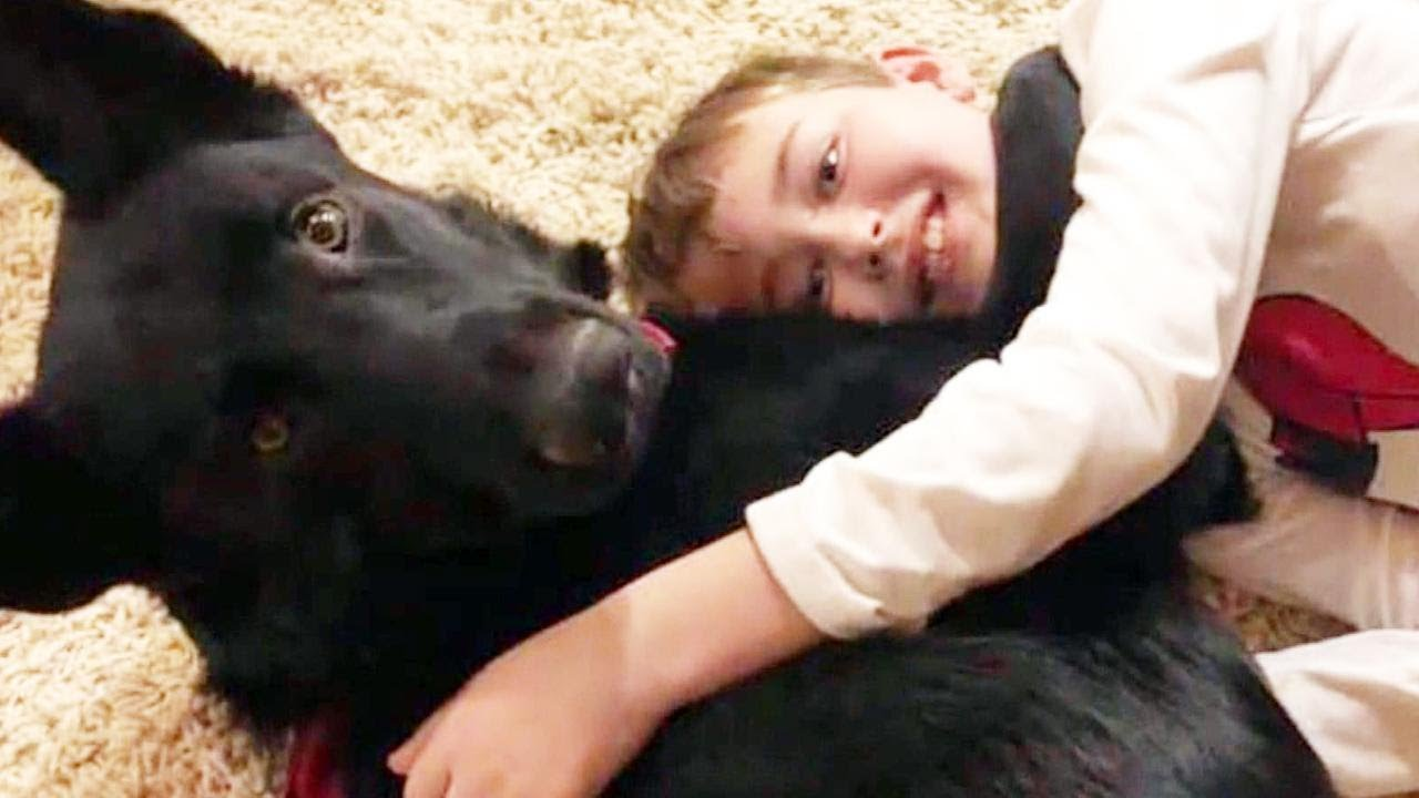 stranger-drives-puppy-2-300-miles-to-cheer-up-boy-with-cancer