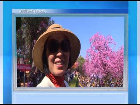 Miles disfrutan de la flor cereza en Kunming