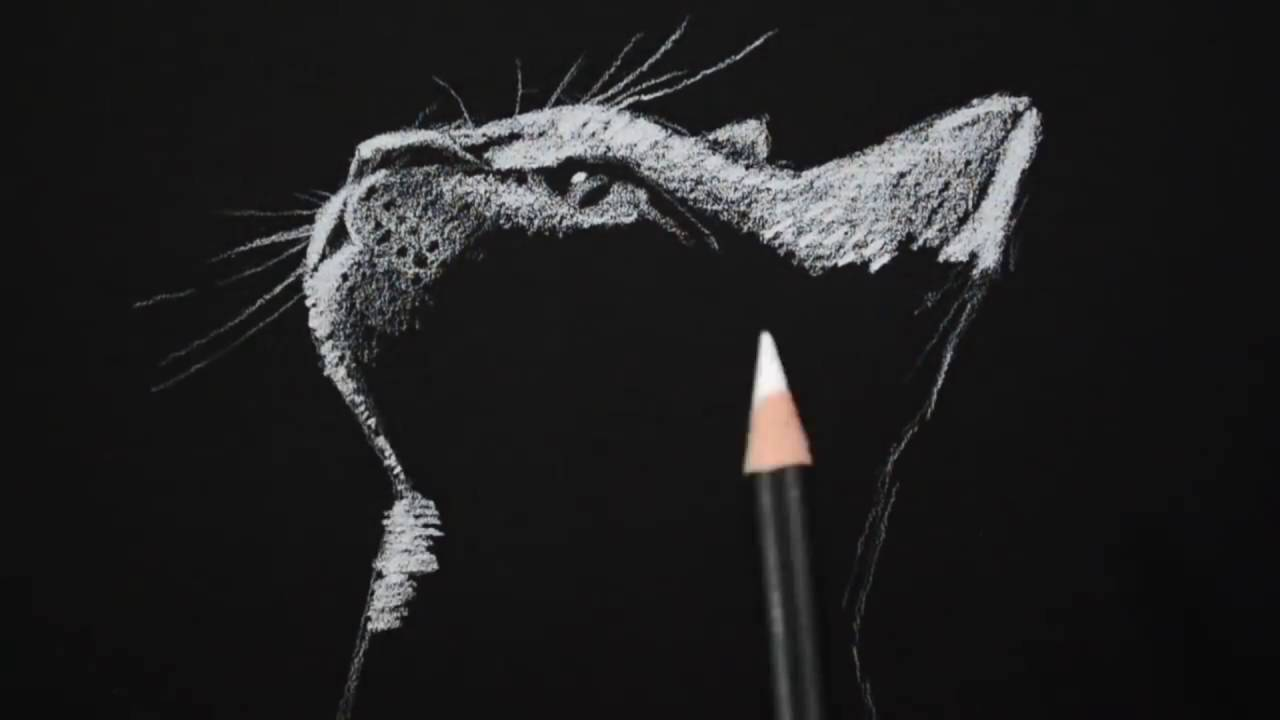 Drawing a cat on black paper with white charcoal