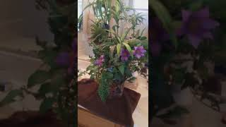 The best way to clean your silk plants!