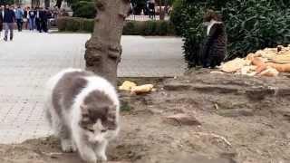 Стамбул-город кошек.