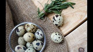 экспертиза перепелиных яиц в домашних условиях