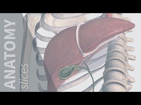 phentermine and gallbladder pain