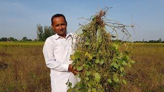 Sabut Mash aur Chawal Recipe | SPLIT BLACK GRAM LENTILS | Village Food Secrets