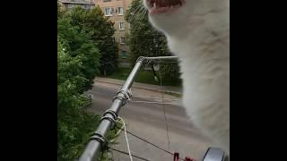 Смешные коты, приколы с котами, приколы, ангора, турецкая ангора, веселые кошки, ласточки, лето