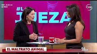 Íntimo: conversamos sobre el maltrato animal y la tenencia responsable de mascotas Parte 1
